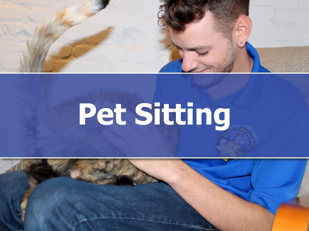 Pet Sitting in Washington DC